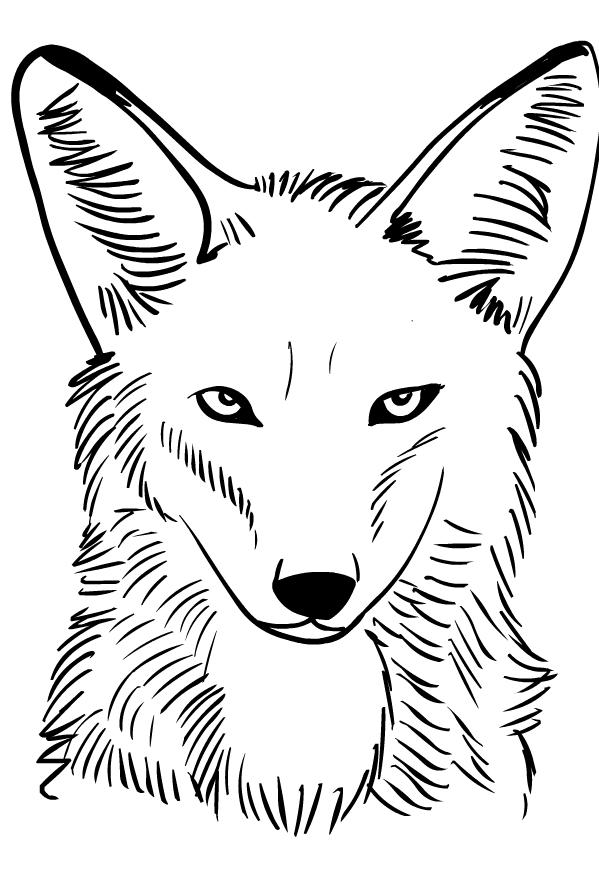 Coloriage de coyote - Dessin de coyote ...