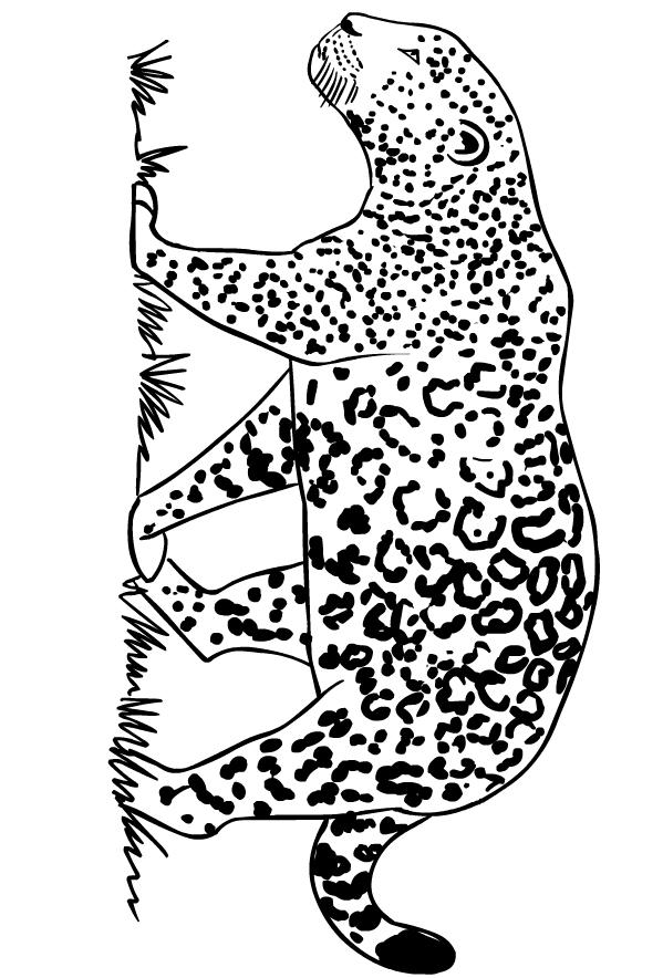Coloriage De Jaguars