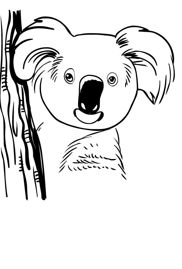 Dibujos De Koala Para Colorear