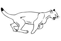 Picante atravesar Antídoto  Dibujos de puma para colorear