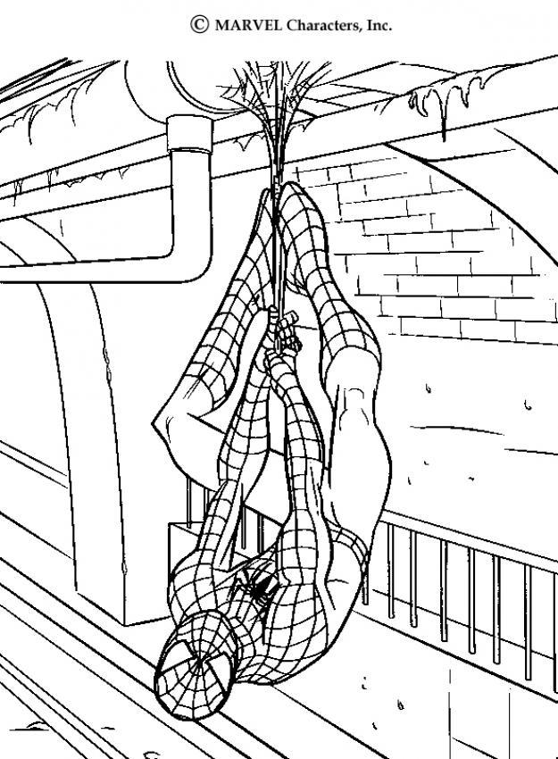 Dibujo de Spiderman colgando del techo para colorear