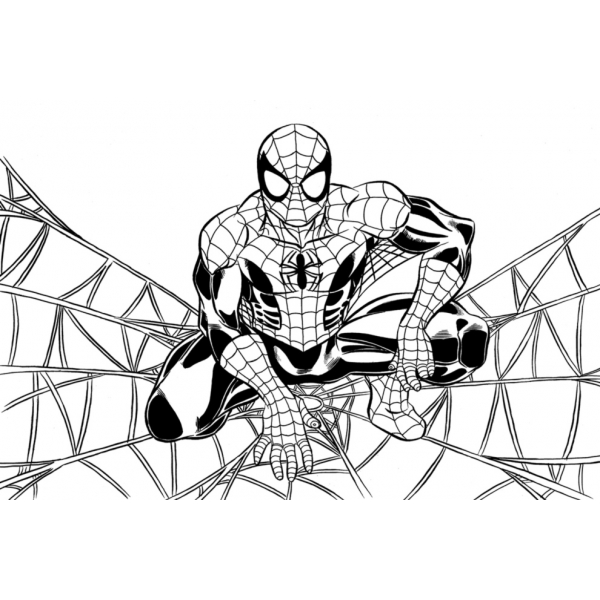 Dibujo de Spiderman sulla ragnatela para colorear
