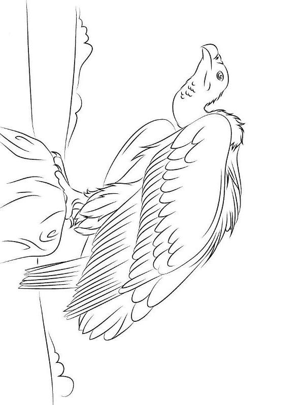 Disegno 14 di Avvoltoi da stampare e colorare