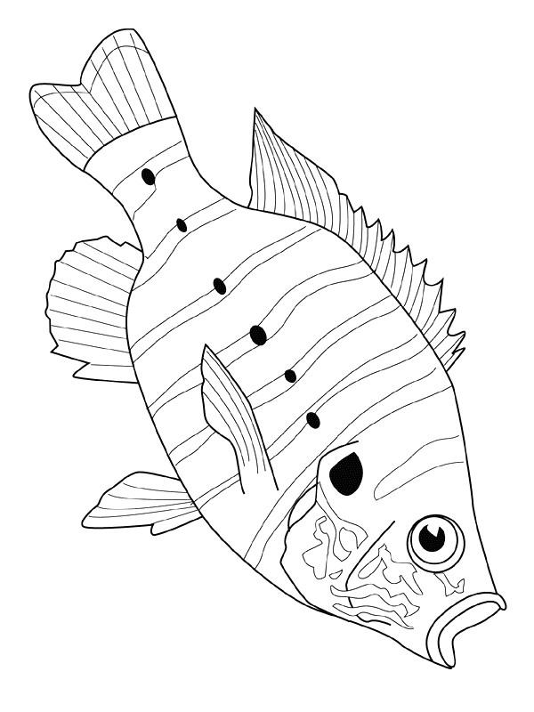 Disegno 1 di Pesci da stampare e colorare