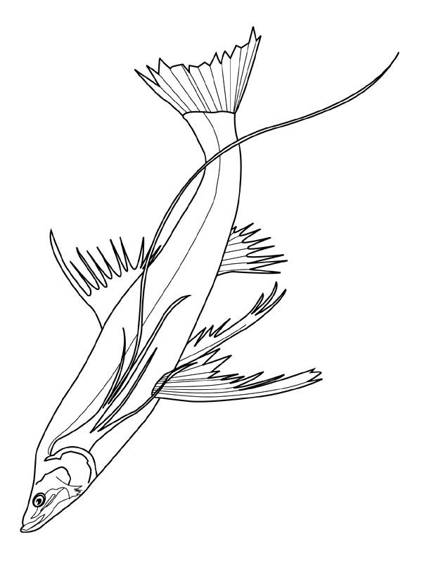Disegno 2 di Pesci da stampare e colorare