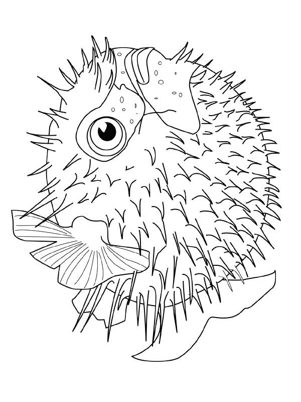 Disegno 14 di Pesci da stampare e colorare