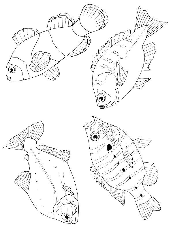 Desenho 16 De Peixes Para Colorir
