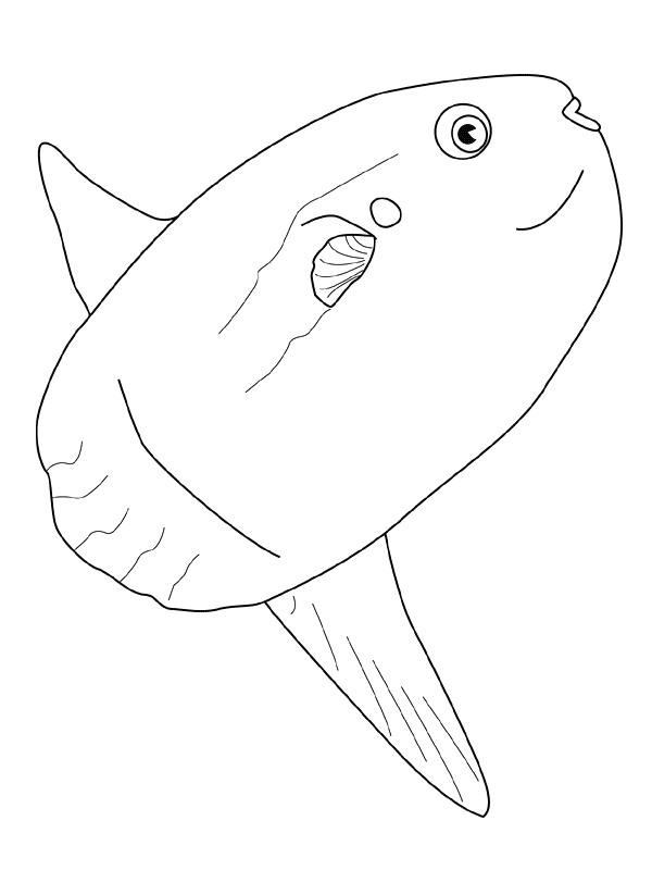 Disegno 20 di Pesci da stampare e colorare