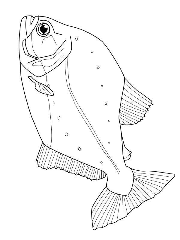 Disegno 24 di Pesci da stampare e colorare