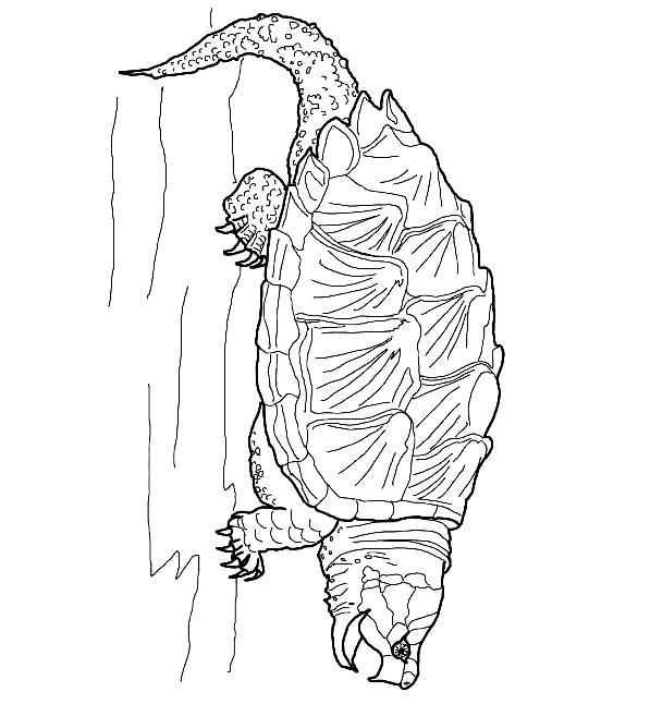 Disegno 2 di Tartarughe da stampare e colorare