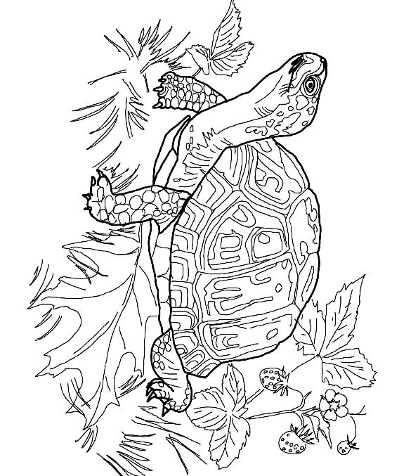 Suunnittelu 3 from Kilpikonnat värityskuvat tulostaa ja värittää