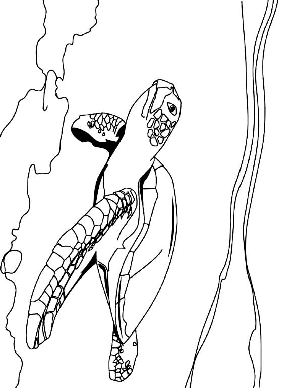 Suunnittelu 4 from Kilpikonnat värityskuvat tulostaa ja värittää