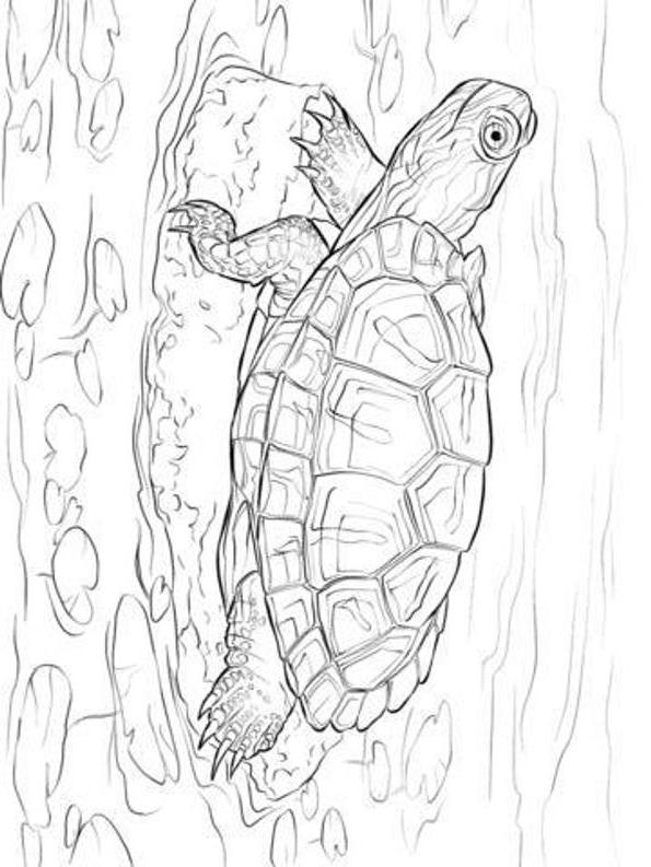 Suunnittelu 6 from Kilpikonnat värityskuvat tulostaa ja värittää