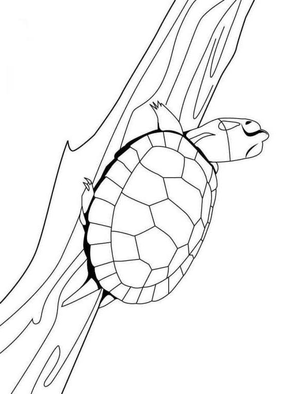 Suunnittelu 7 from Kilpikonnat värityskuvat tulostaa ja värittää