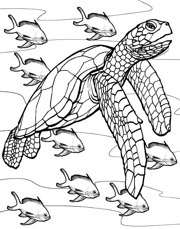 Suunnittelu 9 from Kilpikonnat värityskuvat tulostaa ja värittää
