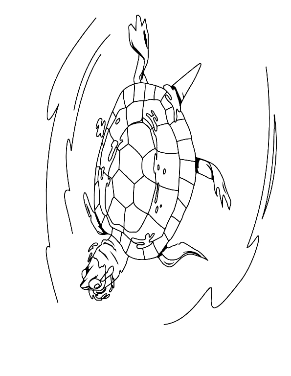 Disegno 10 di Tartarughe da stampare e colorare