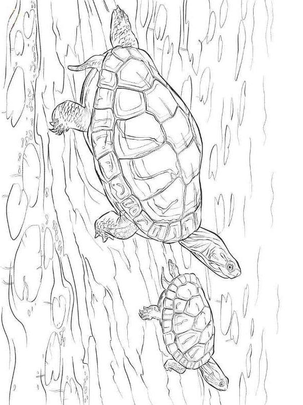 Suunnittelu 12 from Kilpikonnat värityskuvat tulostaa ja värittää