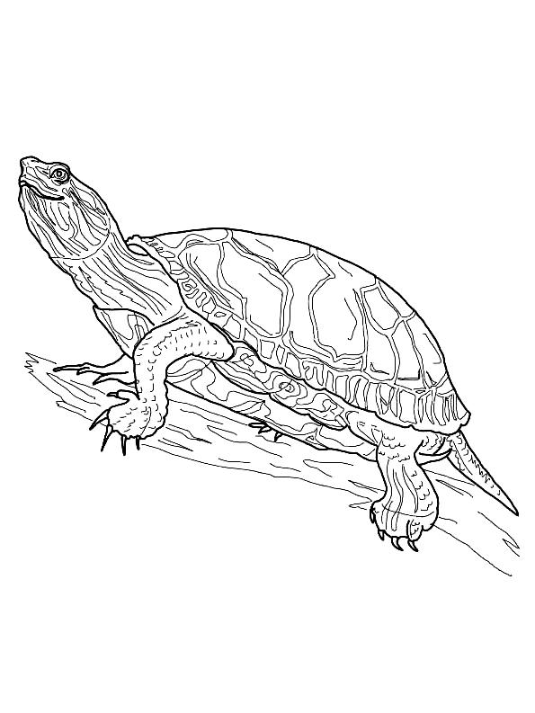 Disegno 13 di Tartarughe da stampare e colorare
