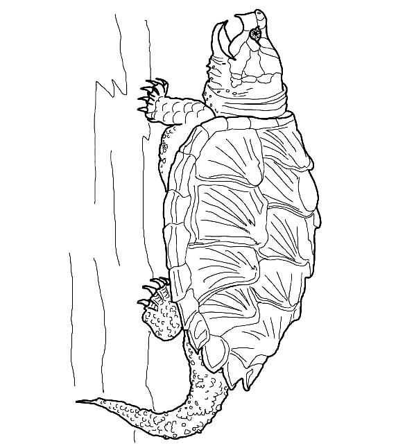Suunnittelu 15 from Kilpikonnat värityskuvat tulostaa ja värittää