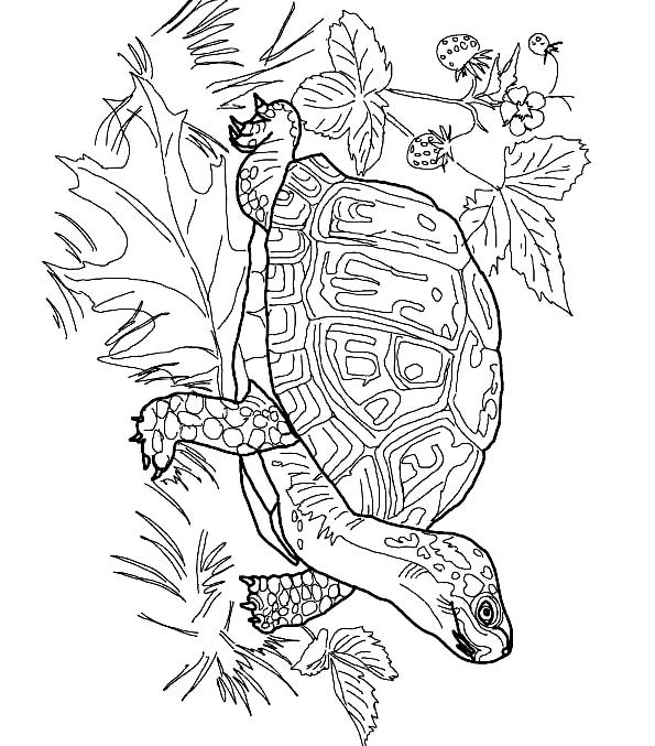 Suunnittelu 16 from Kilpikonnat värityskuvat tulostaa ja värittää