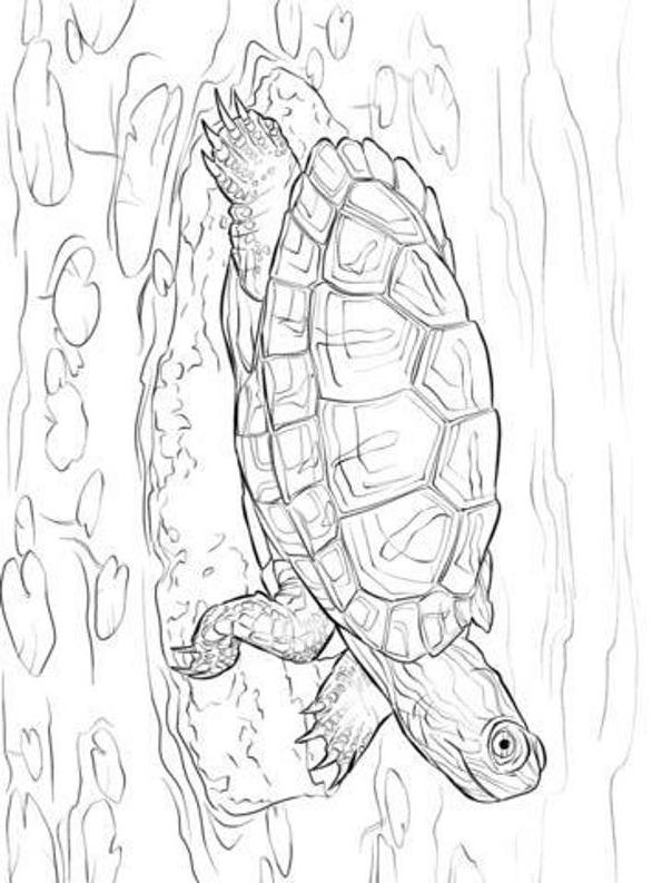 Disegno 19 di Tartarughe da stampare e colorare