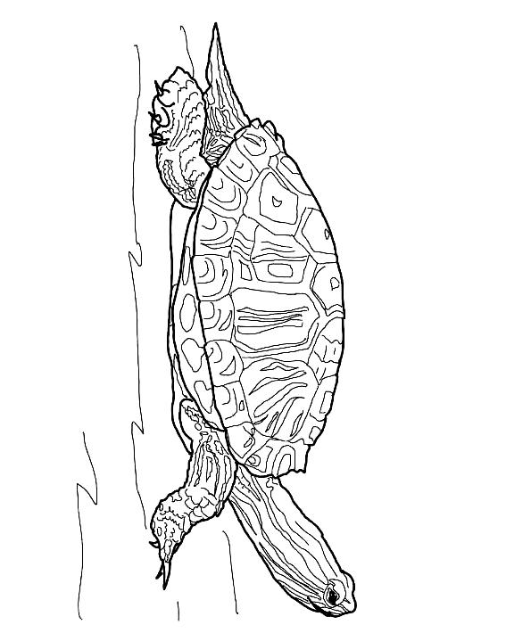Suunnittelu 20 from Kilpikonnat värityskuvat tulostaa ja värittää