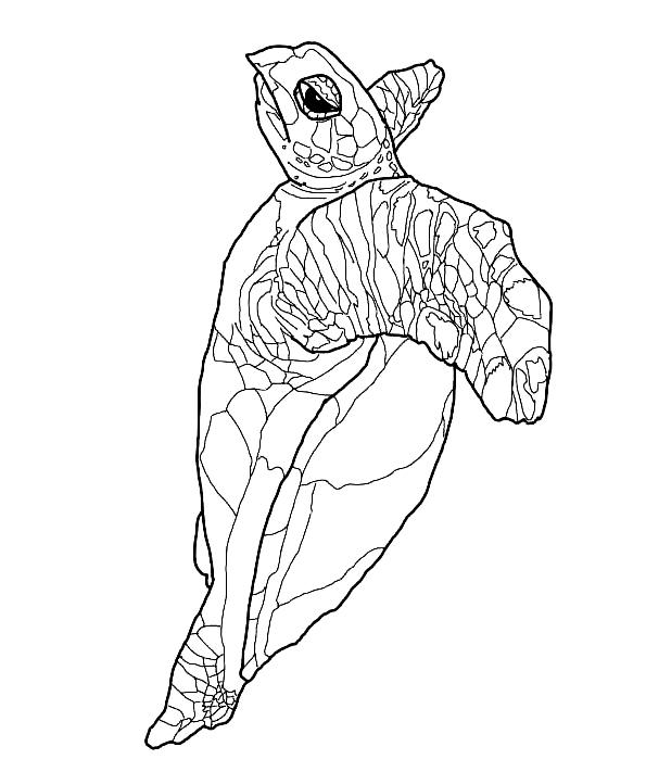 Suunnittelu 21 from Kilpikonnat värityskuvat tulostaa ja värittää