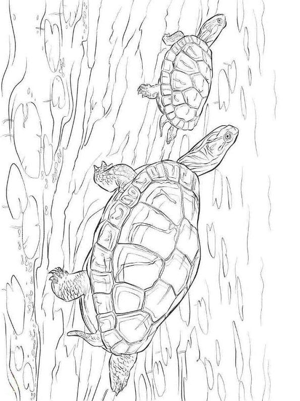 Suunnittelu 22 from Kilpikonnat värityskuvat tulostaa ja värittää