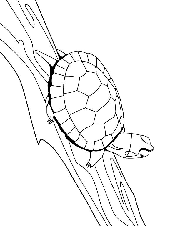 Disegno 24 di Tartarughe da stampare e colorare
