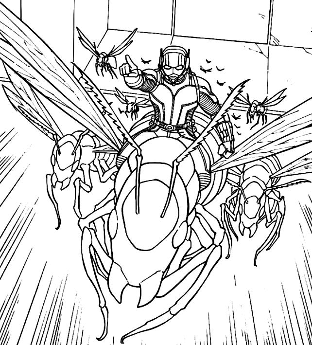Disegno di AntMan che anda le vespe da colorare