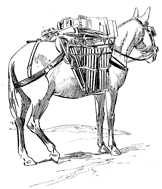 Drawing 2 from Donkeys coloring page to print and coloring
