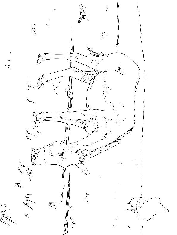 Drawing 4 from Donkeys coloring page to print and coloring