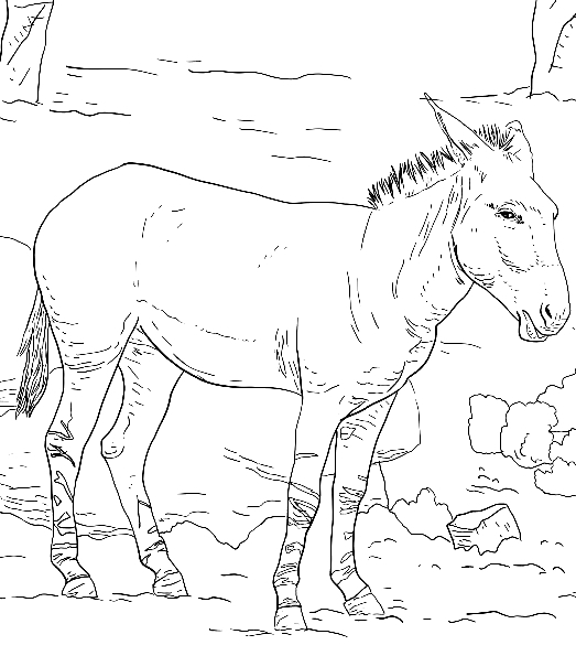 Drawing 7 from Donkeys coloring page to print and coloring