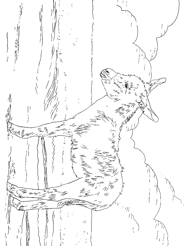 Drawing 8 from Donkeys coloring page to print and coloring