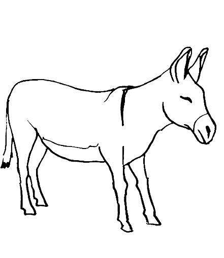 Disegno 11 di asini da stampare e colorare