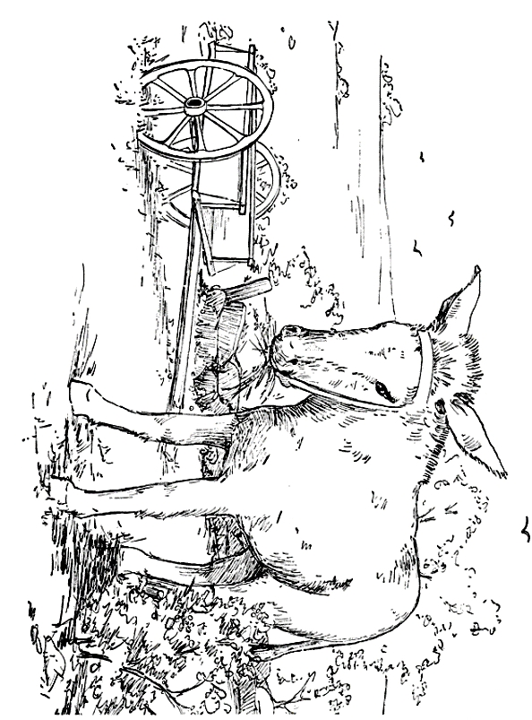 Drawing 21 from Donkeys coloring page to print and coloring
