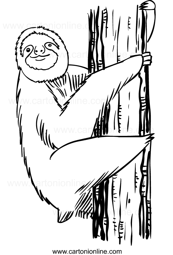 Disegno di bradipi da stampare e colorare