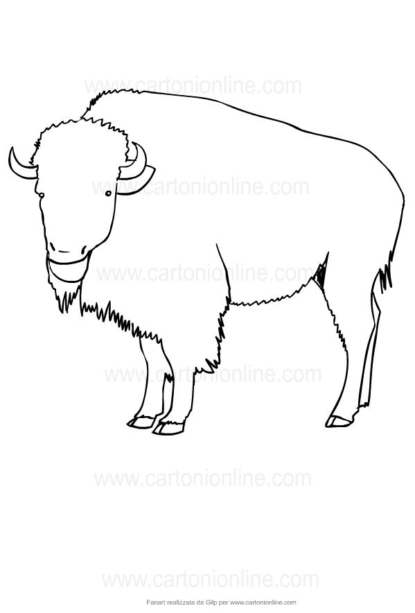 Disegno di bufali da stampare e colorare
