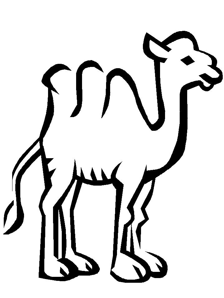 Disegno 9 di cammelli da stampare e colorare