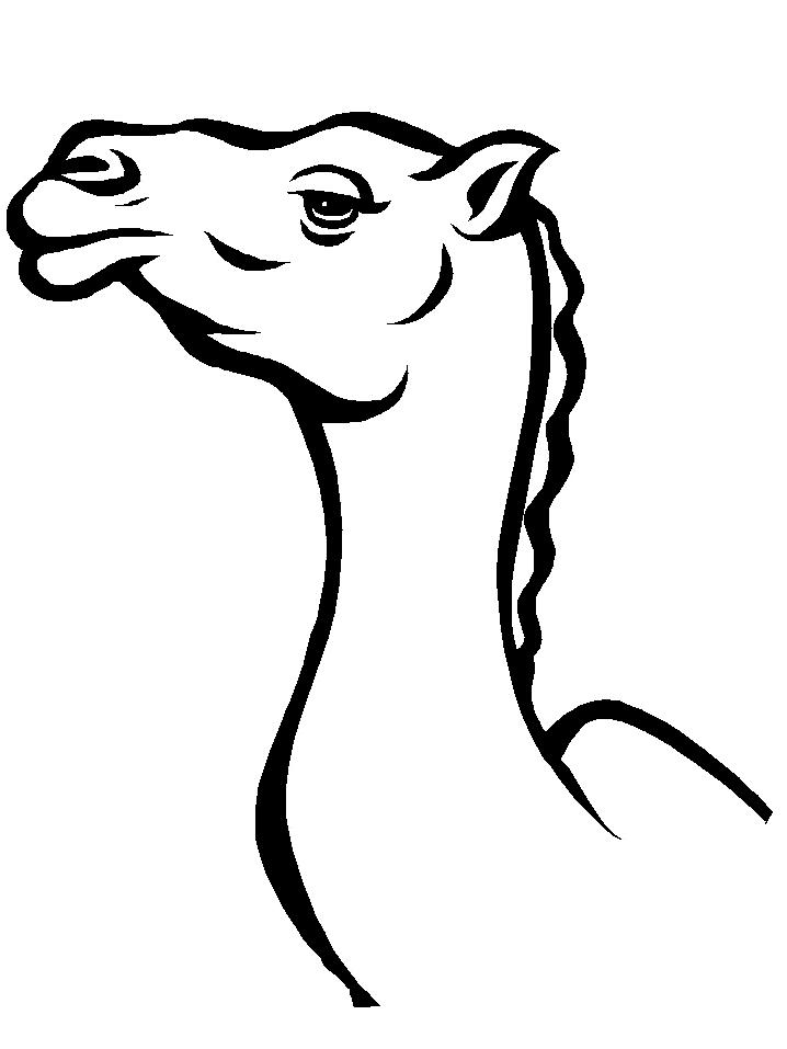 Disegno 11 di cammelli da stampare e colorare
