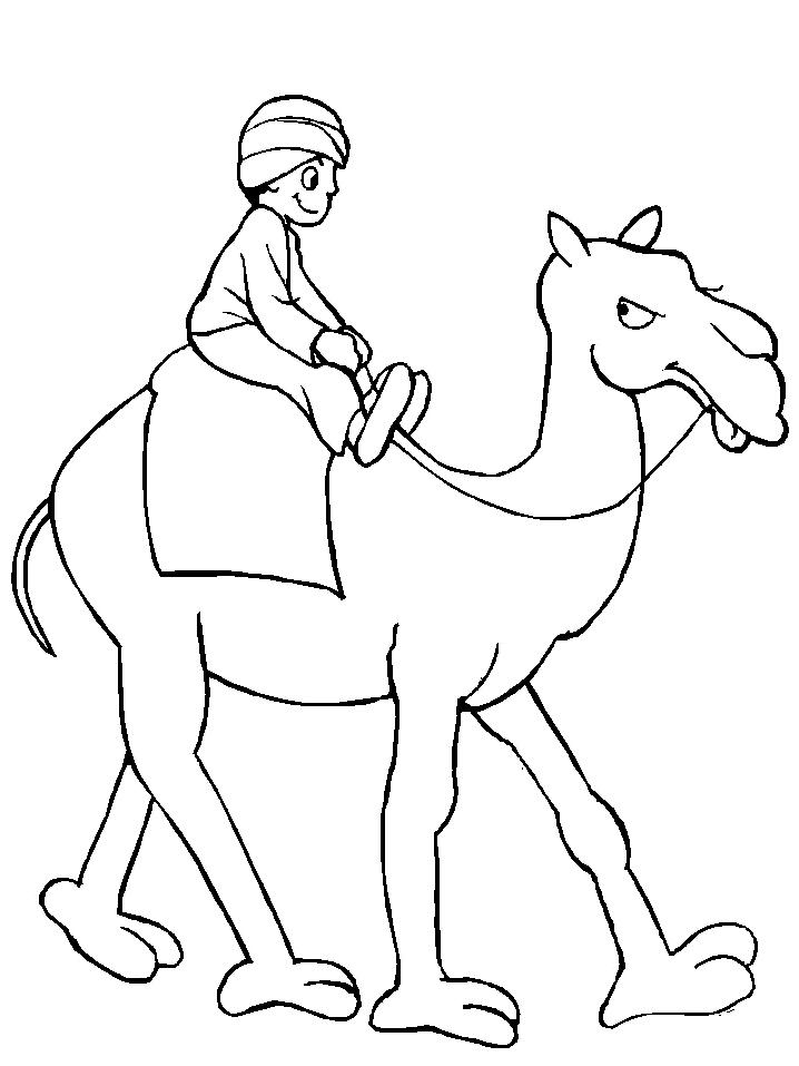 Disegno 12 di cammelli da stampare e colorare