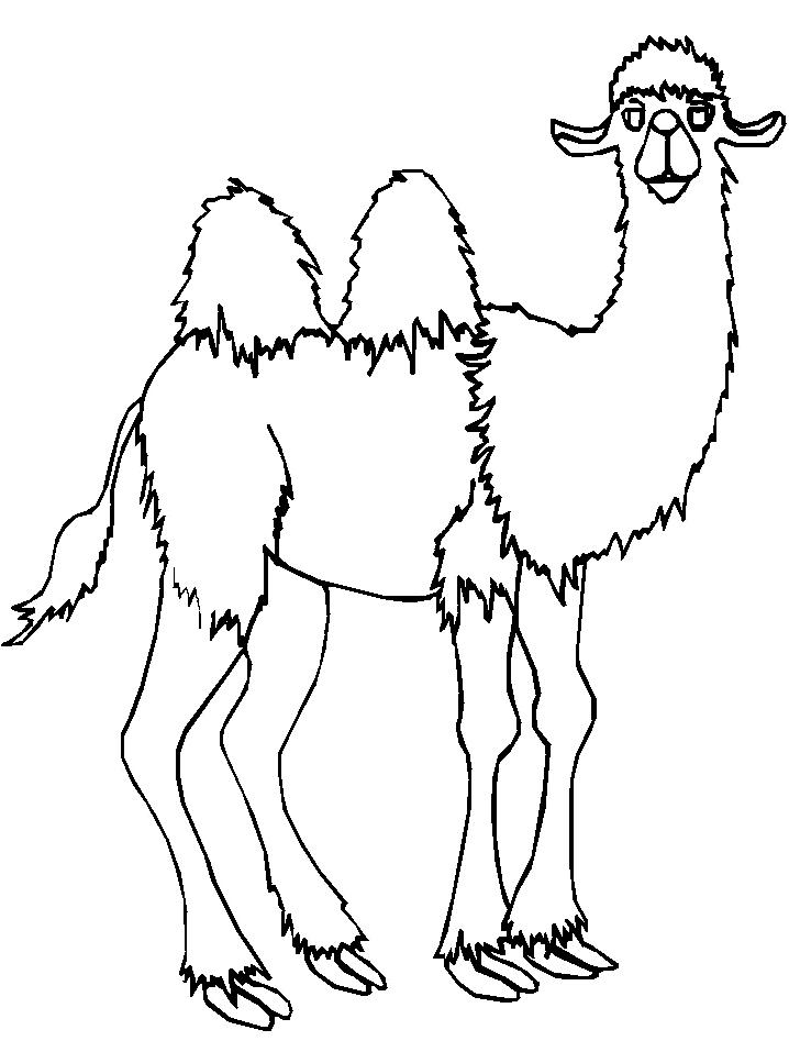 Disegno 13 di cammelli da stampare e colorare