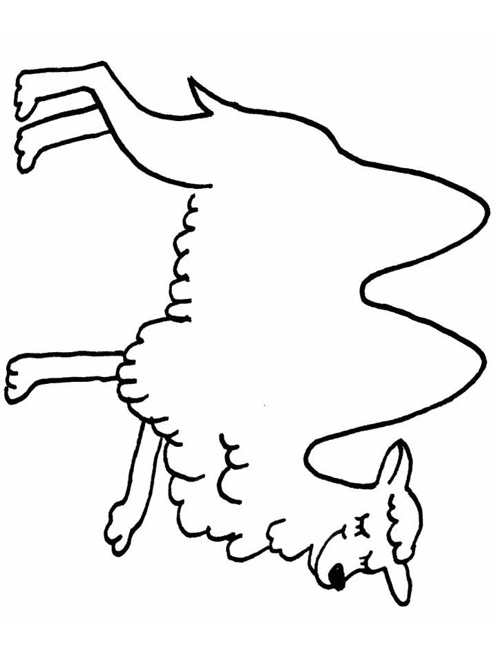 Disegno 15 di cammelli da stampare e colorare