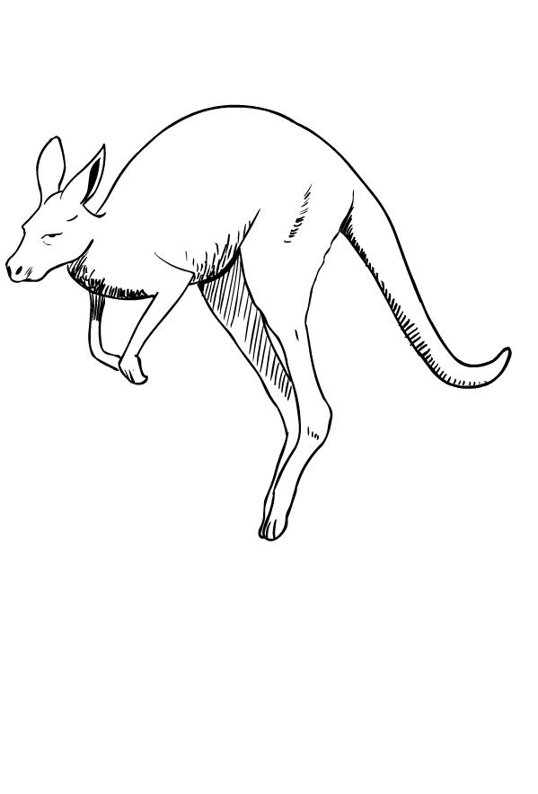 Disegno di canguri da stampare e colorare