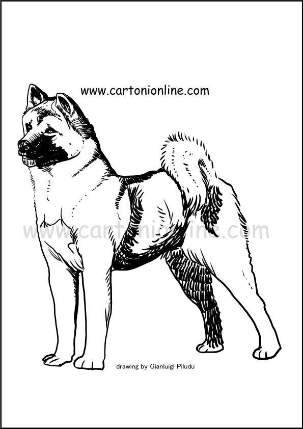 Disegno di Akita da stampare e colorare