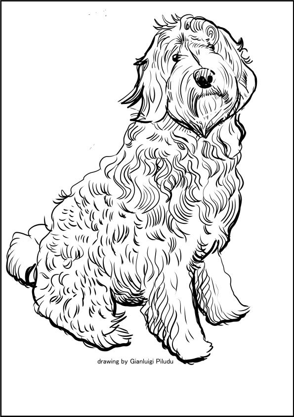 Disegno di Labradoodle da stampare e colorare