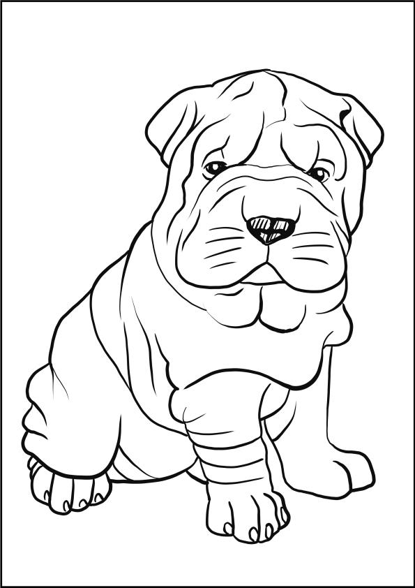 Disegno di Shar Pei da stampare e colorare