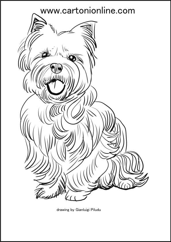 Gallery For > Yorkie Terrier Coloring Pages | Dog drawing ... | 842x595
