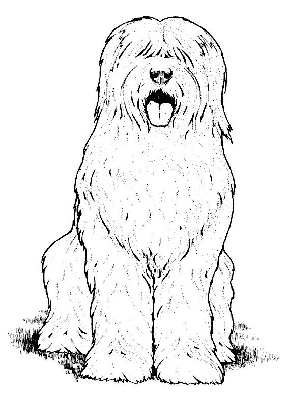 Disegno 10 di cani da stampare e colorare