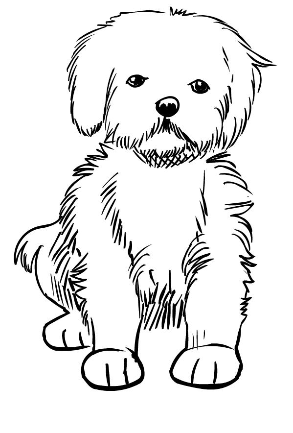 Disegno di cani da colorare for Disegni di lupi da stampare